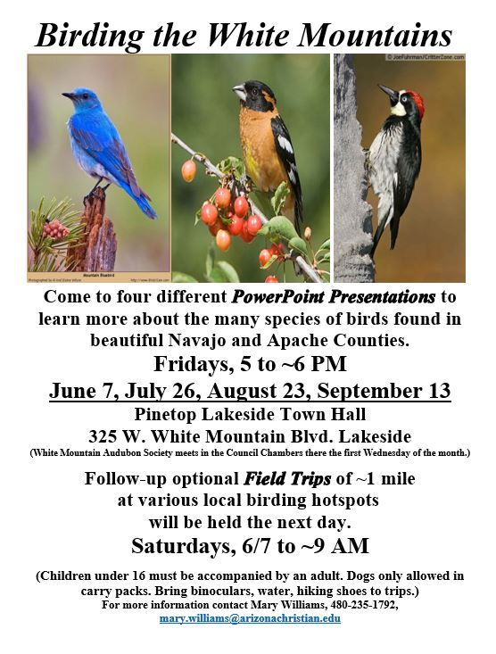 Birding in the White Mountains