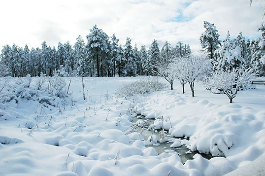 Frozen Creek and Snowy Trees and Landscape