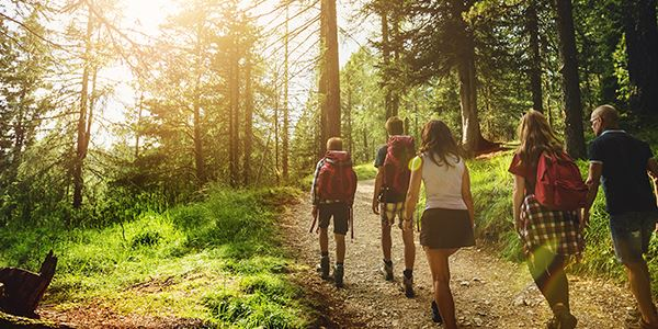 Group of Hikers on a Forest Trail